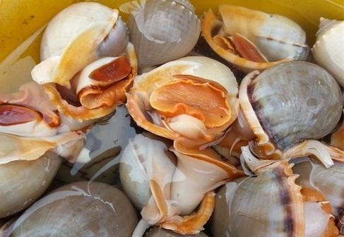 Chọn mua ốc biển tươi ngon